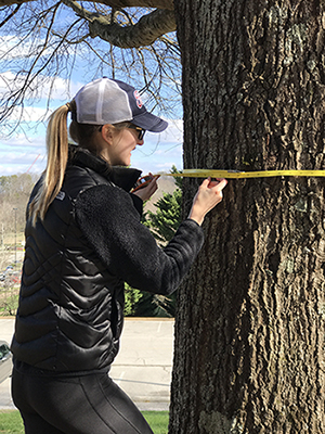 Biology student measures tree